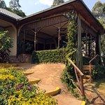 Silverback Lodge Photo