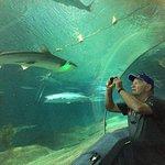 great reef at aquarium