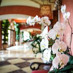 Lobby hallway outside the cafe. Orchids everywhere!!