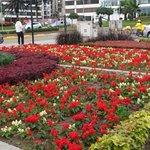 Jardines al final del Malecon 28 de Julio