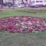 Jardines de Flores