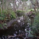 Platypus Stream