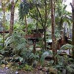 Photo de Sendero Los Quetzales (The Quetzales Trail)