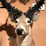 Foto di The Buckhorn Saloon and Texas Ranger Museum