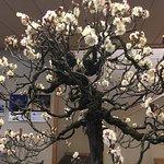 Photo of Omiya Bonsai Art Museum, Saitama