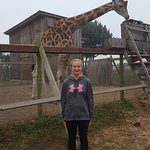 Had to come to see the giraffes up close!