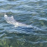 Baby dolphin decided the boat was a good lace to make new friends