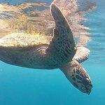 Great snorkelling!
