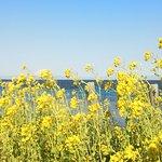 黄色い菜の花がいっぱい