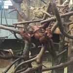 Photo of Krefeld Zoo