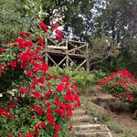 Mirador y rosas