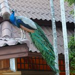 Photo de The Aiyapura Koh Chang