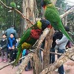 Biotropica la Serre Zoologique Foto