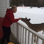 One of the deer who visit daily