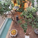 The courtyard with a lemon tree