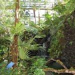 Foto de The Kochi Prefectural Makino Botanical Garden