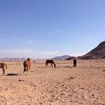 Desert Homestead Lodge Foto
