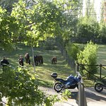 Watched as the horses came to welcome breakfast bikers!