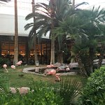 Another view of Flamingo park area from restaurant