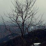Photo de 1509816