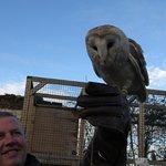 flying the Barn Owl