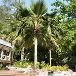 Photo of Malolo Island Resort