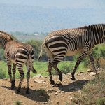 Mountain Zebra National Park Image