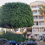 Estella Hotel Apartments Foto