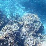 Marine life is still quite abundant