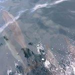 Les dauphins nous font l'escorte