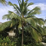 Coconut Palm outside room