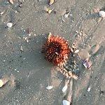 Fantastic hotel. Lot of shells, sea urchin, & sponge on the beach. Sun set was beautiful. Had di