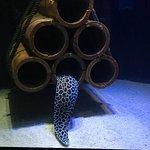Photo of Underwater World Langkawi