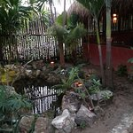 Garden at the Leaky Palapa, Xcalak