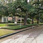 nice tree-lined street