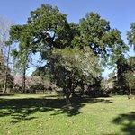 Foto de Plantation Mouton (Bois Des Chenes)