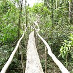 Balade en jungle