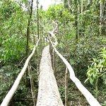 Cayman Lodge Amazonia Foto