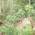 Photo of Cayman Lodge Amazonia