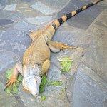 Aquaworld Aquarium & Reptile Rescue Centre Foto
