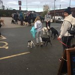Monthly dog walking group