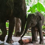 two of the elephants that we were able to feed