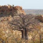 Photo of Mapungubwe National Park