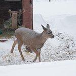 Foto de Alaska Wildlife Conservation Center