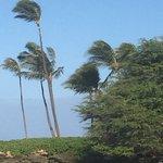 Paradise Cove Beach Foto