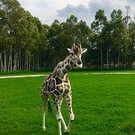 Foto de Zoologico Guadalajara
