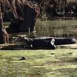 Foto di Champagne's Cajun Swamp Tours