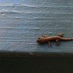 A tiny baby gecko. So cute.