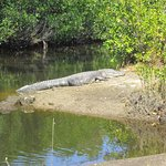 Jungle Erv's Everglades Airboat Tours Picture