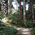 Pathway around the garden